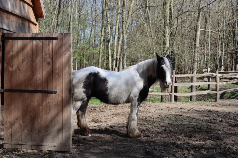 Paard Slot Schaesberg.png