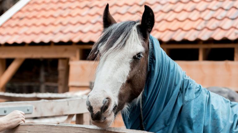 Historische boerderij paard.png